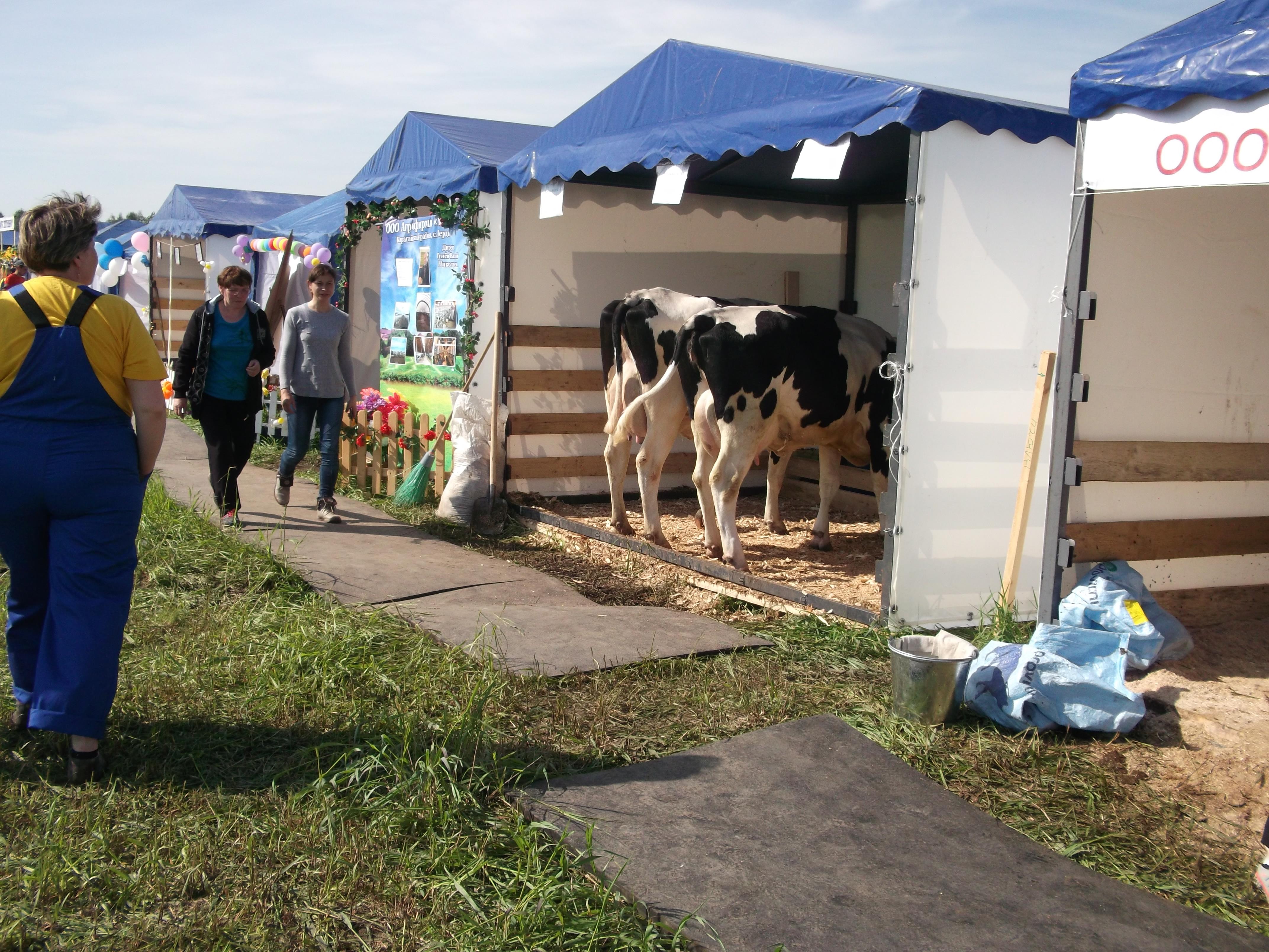 Завершилась выставка племенного животноводства